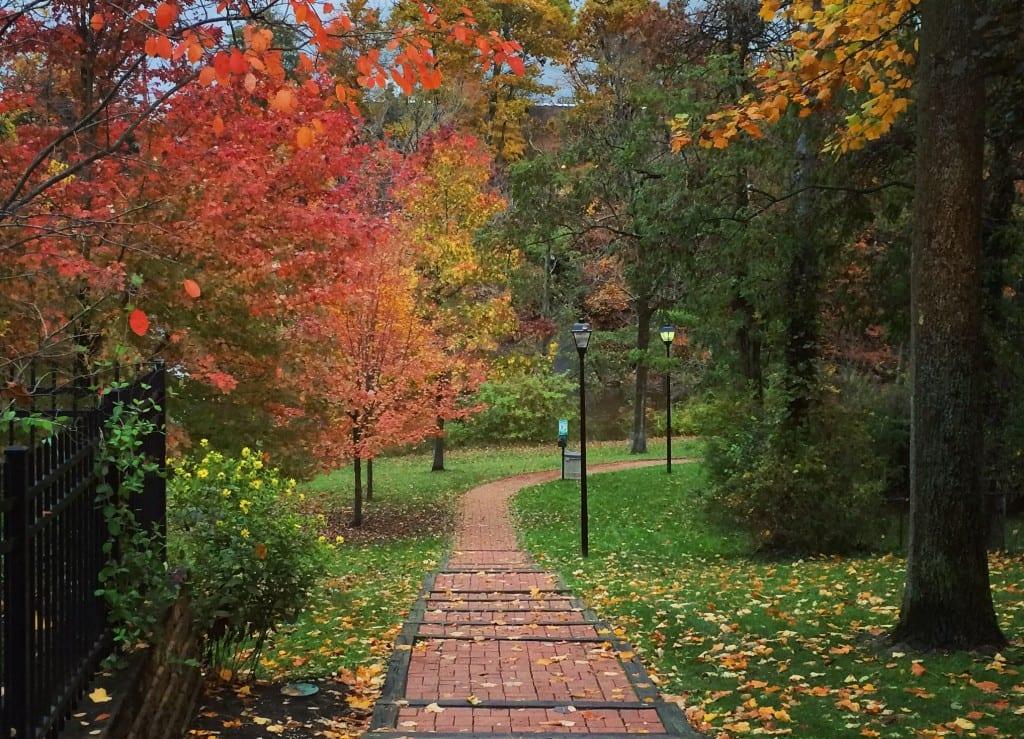 Autumn CF