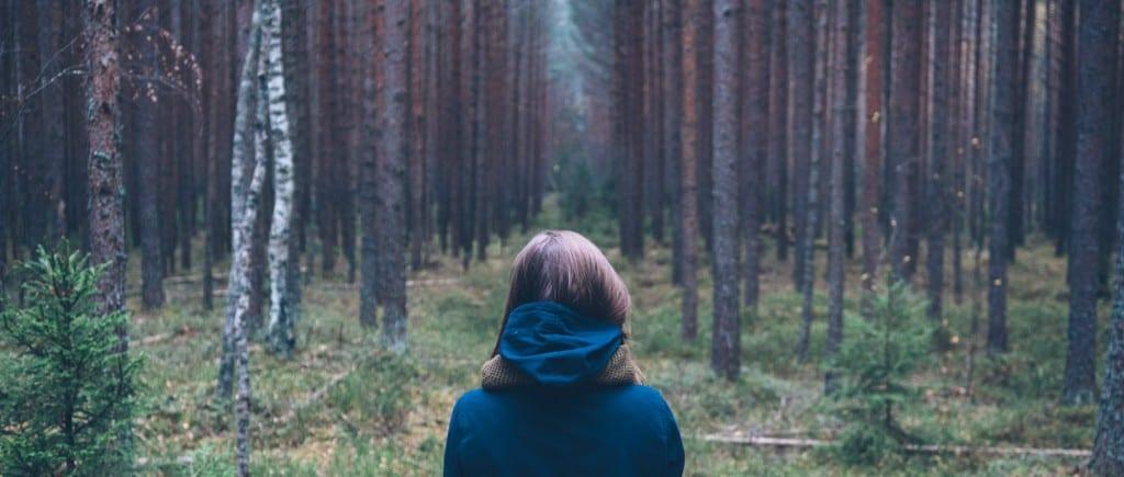 woods - landscape