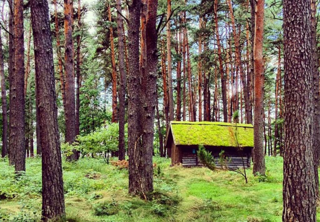 Latvian cabin porn.